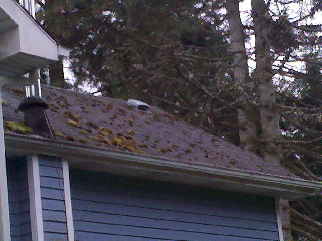 Asphalt Shingle Roof Cleaning